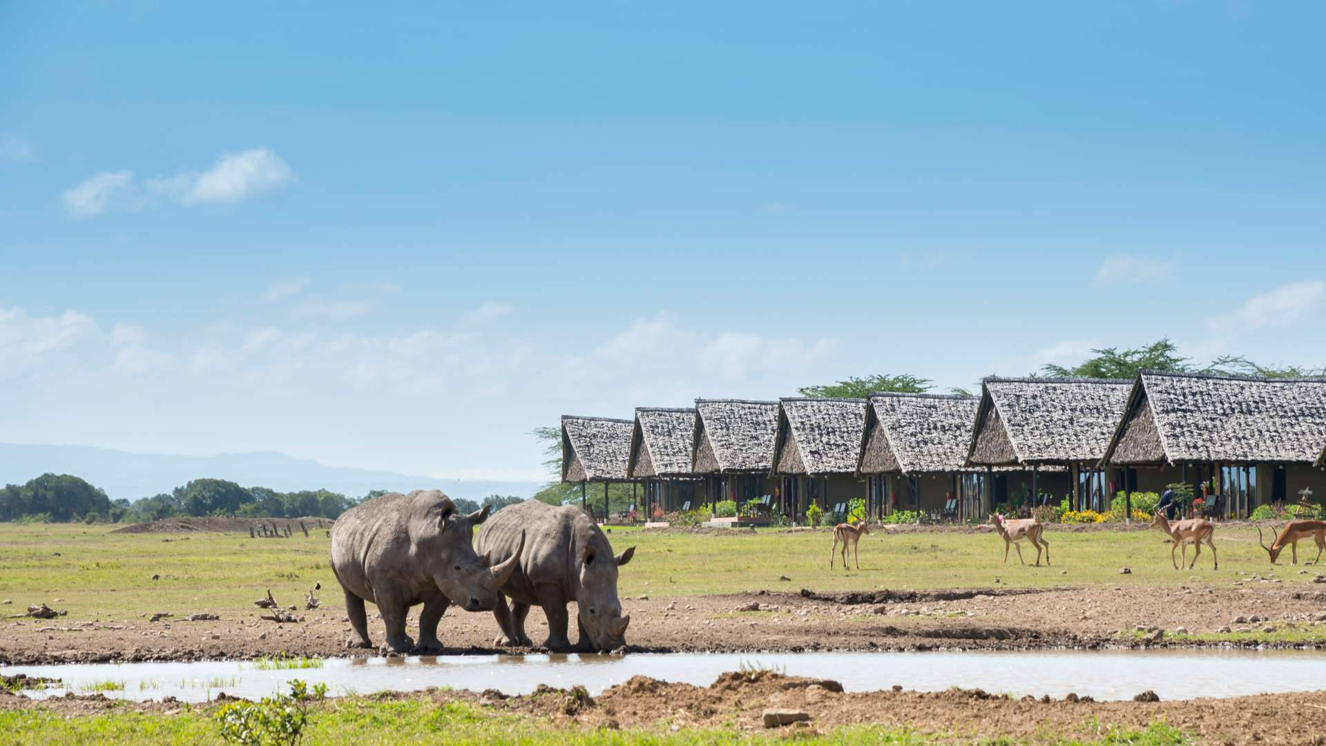 Sweetwaters Serena Camp, Ol Pejeta 2021
