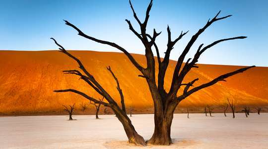 Petrified Forest, Dead Vlei