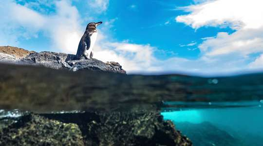 Galapagos Inner Loop & Outer Loop