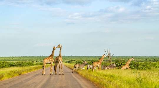 South Africa Safari & Cruise