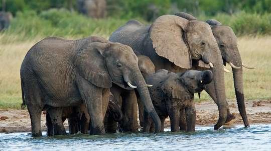 Zimbabwe, Wildlife & Water