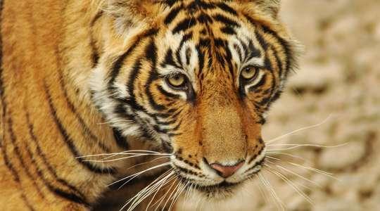 Temple, Tiger & Taj Trail