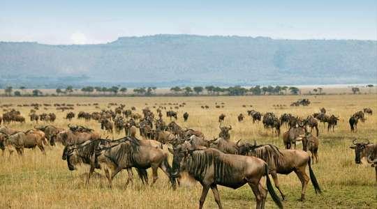 Complete Kenya