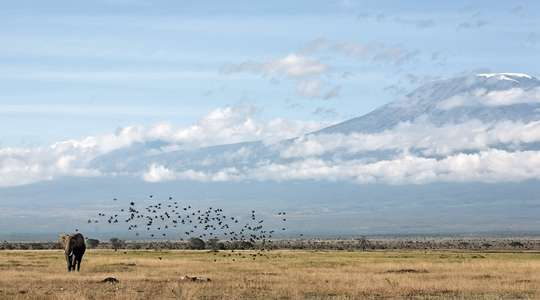 View at Amboseli Serena Safari Lodge