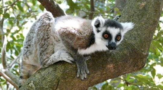 Madagascar Wildlife Tour