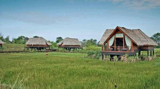 Paddy Field Pavilions
