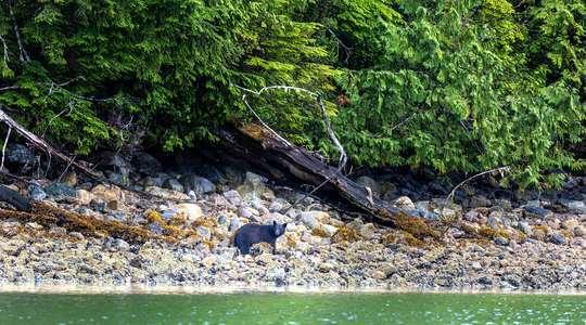 Whales, Bears & Vancouver Island Self-Drive
