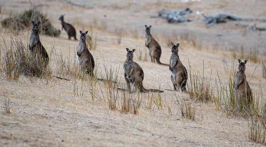 Kangaroo Island tour with Kangaroo Island Wilderness Tours
