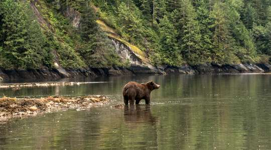 Great Bear Rainforest - British Columbia's Wildlife Lodges
