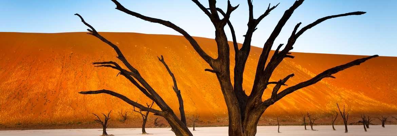 Petrified Forest, Dead Vlei