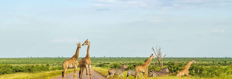 South Africa Safari & Cruise