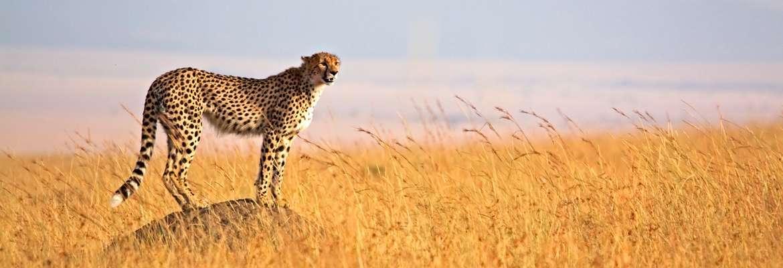 Kenya & Tanzania Safari