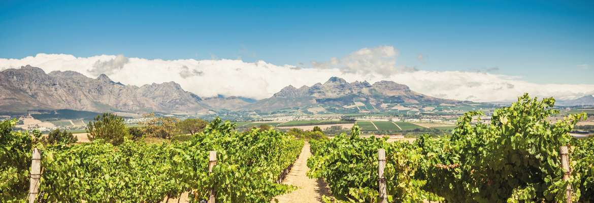 Cape Town, Wine & Whales Self-Drive