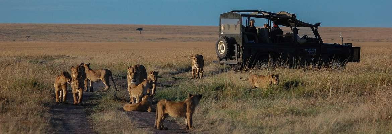Governors' Grand Safari