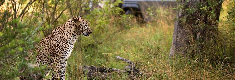 Victoria Falls, Kruger & Mozambique